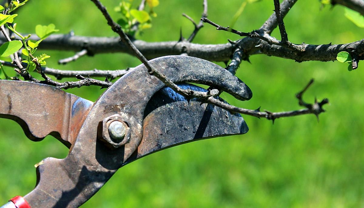 Elagage entretien de jardin limoges phyto puration for Elagage entretien jardin